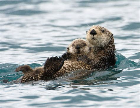 23 Photos Of Animals And Their Parents That Will Melt Your