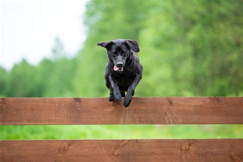 8 Ways to Stop Your Dog From Jumping the Fence | Canine Weekly