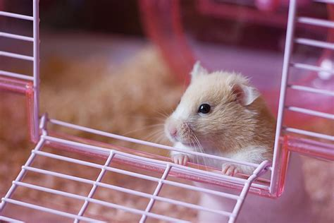 What Do Hamsters Need For Supplies?