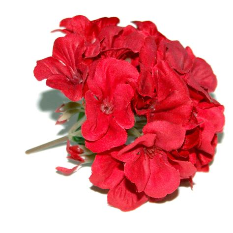 Red geranium clipart 20 free Cliparts   Download images on
