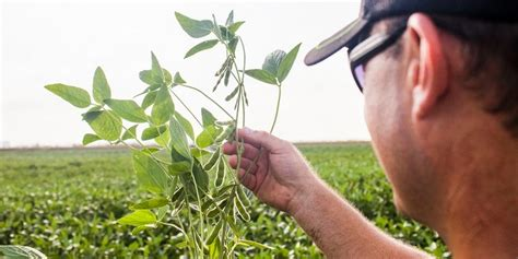Plant Disease Management : Points to Ponder upon