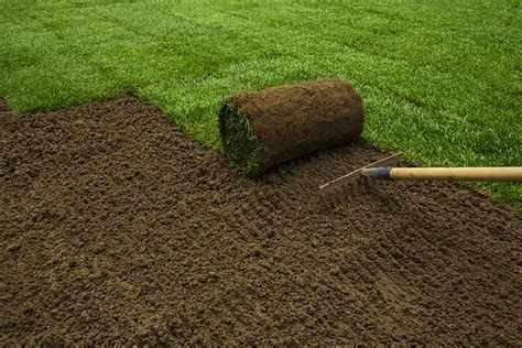 How To Plant A New Lawn From Seed or Sod • The Garden Glove