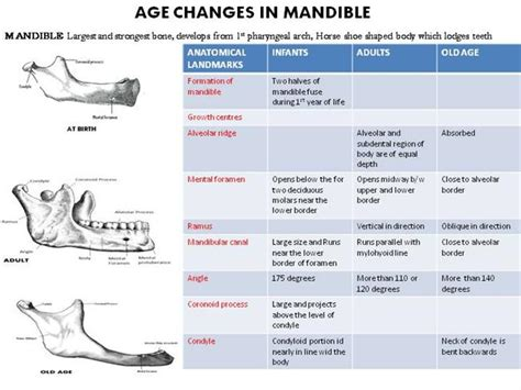 AGE CHANGES in MANDIBLE |authorSTREAM