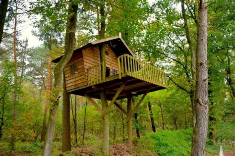 Send Us a Photo of Your Favorite Backyard Treehouse