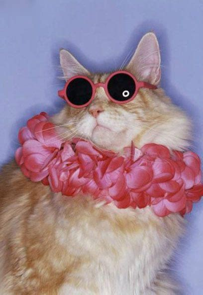 Cute & Funny Cats Wearing Glasses - AmO Images - AmO Images