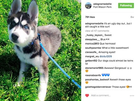 How To Make Your Dog Instagram Famous in 10 Weeks or Less