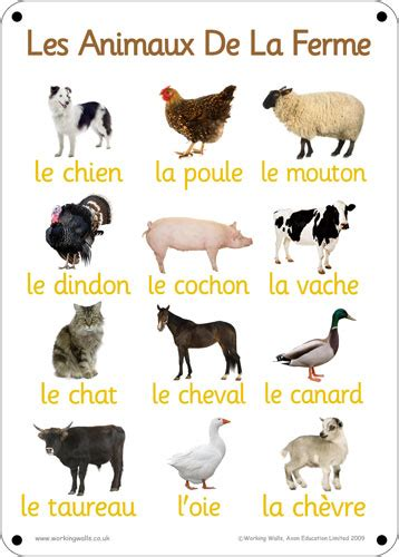 Pronunciation of French animal vocabulary words , French