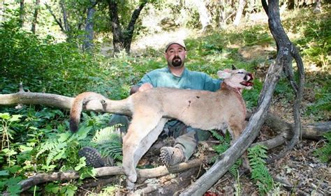 Tejon Ranch to pay fine for killing mountain lions