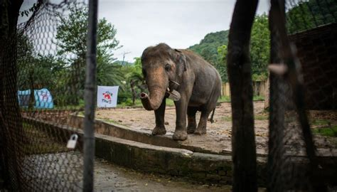 'World's loneliest elephant' cleared to leave run-down