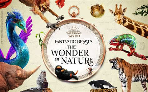 Fantastic Beasts: The Wonder of Nature exhibition to open