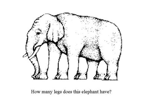 Elephant Optical Illusion   Pictures and Images