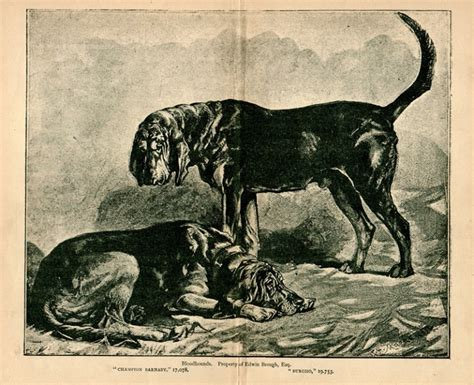 Tracking Jack the Ripper through the Use of Bloodhounds