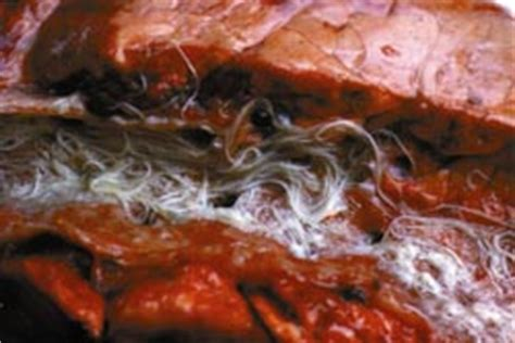 Vet warns of seriousness of husk in calves and adult