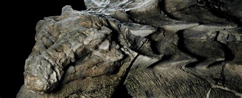 A New Dinosaur Fossil Found in Alberta Is So Well