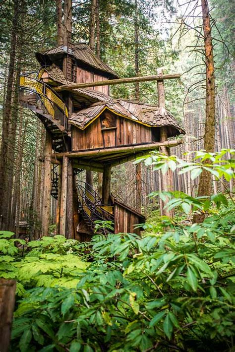 PHOTOS & VIDEOS | The Enchanted Forest, BC