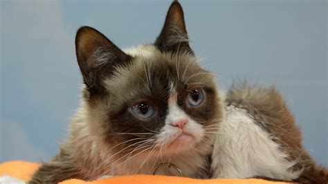 18 Unforgettable Grumpy Cat Memes That Made Her An