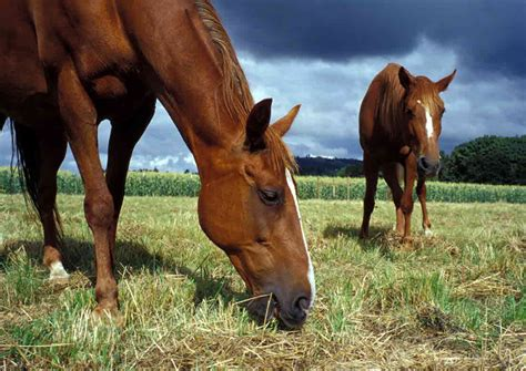 The Ethics | The Transportation of Live Horses